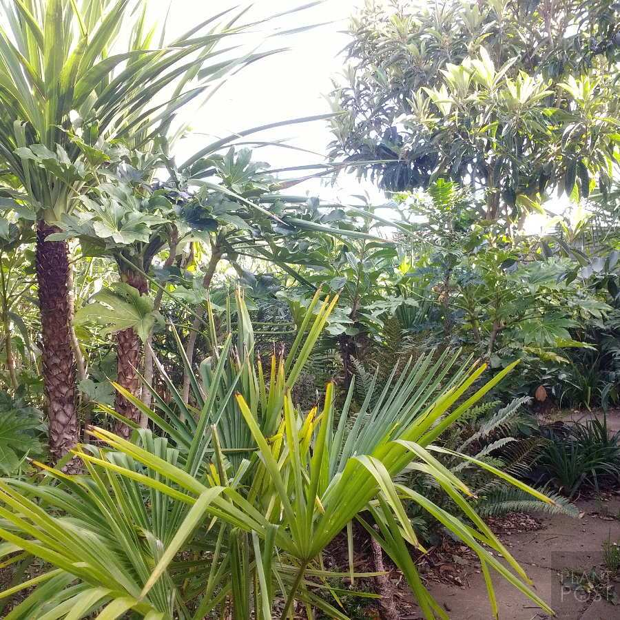 Tropical Plants You Can Use To Create A Uk Hardy Exotic Paradise